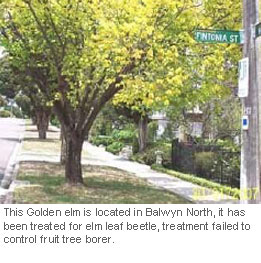 mistaken-treatment-for-fruit-tree-borer
