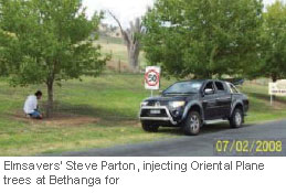 steve-parton-injecting-oriental-plane-trees