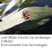 Insect-treatment-for-Eucalypts_17