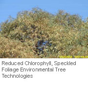 Insect-treatment-for-Eucalypts_18