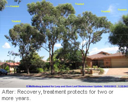 Insect-treatment-for-Eucalypts_6b