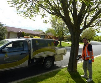 Elmsavers helps Protect 600 Elm trees in Bathurst