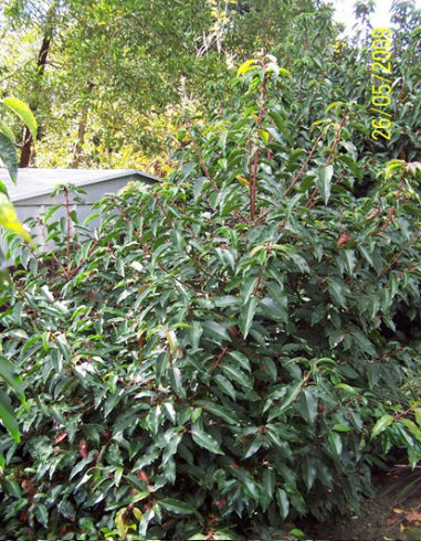 Treatments-for-Phytophthora