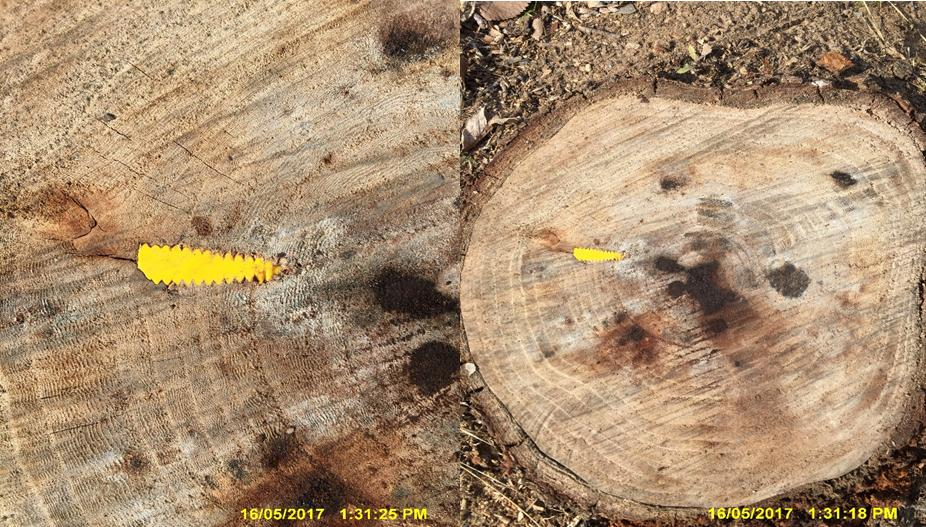 Tree injection Good Outcomes for Tree Health