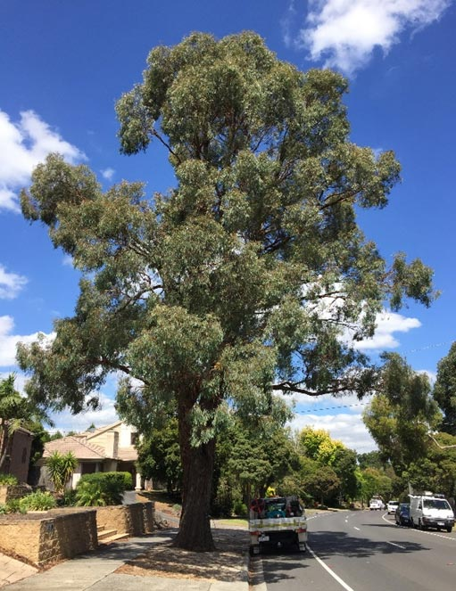 Tree Poisoning Recovery Treatment